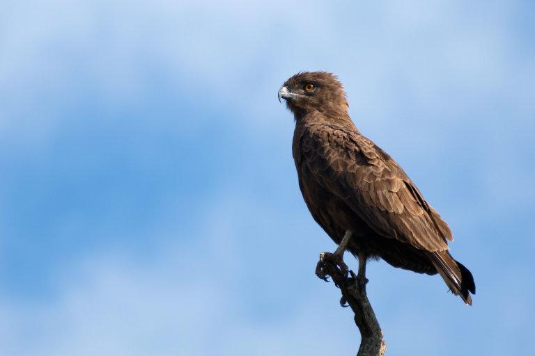 Grote roof vogel