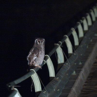 Voorvertoning Uil op de brug