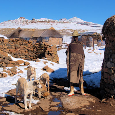 Voorvertoning Lokale man met zijn honden