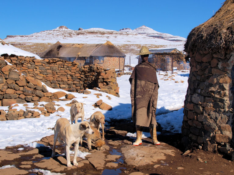 Lokale man met zijn honden