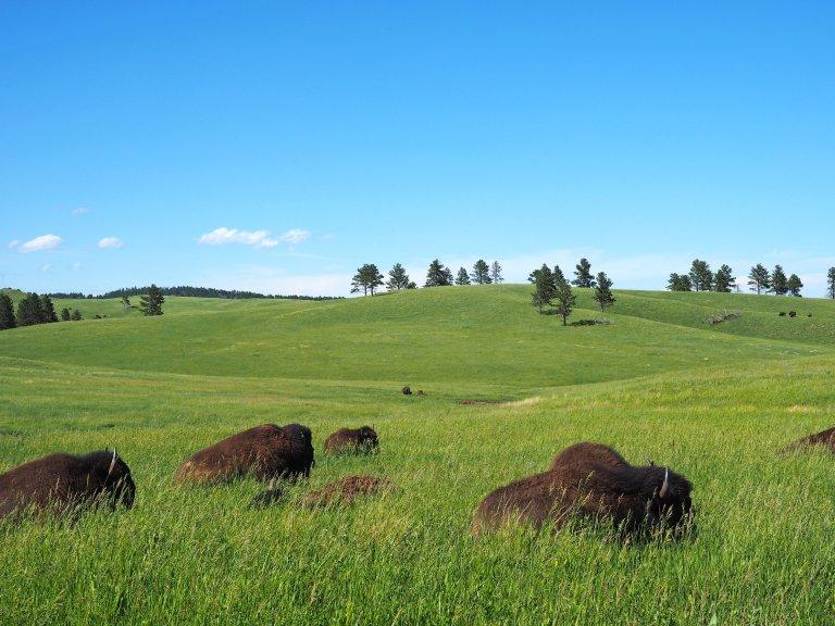 Nebraska, golvend land met wat bisons