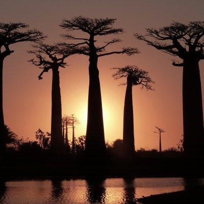 Voorvertoning Prachtige sunset op Baobab Alley