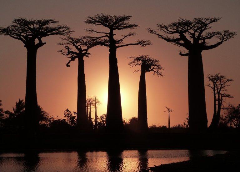 Prachtige sunset op Baobab Alley