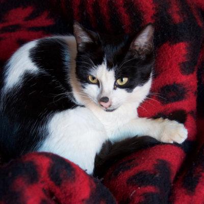 Voorvertoning De kat op onze dekens!