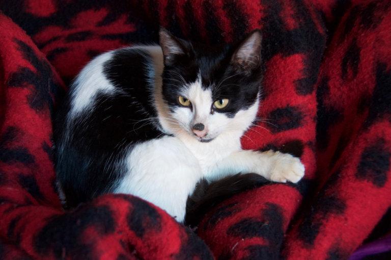 De kat op onze dekens!