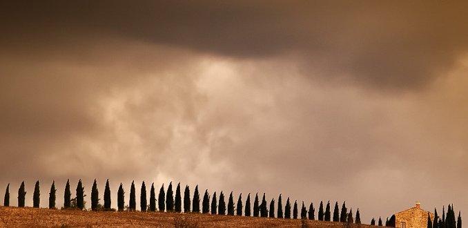 Bomen rijtje