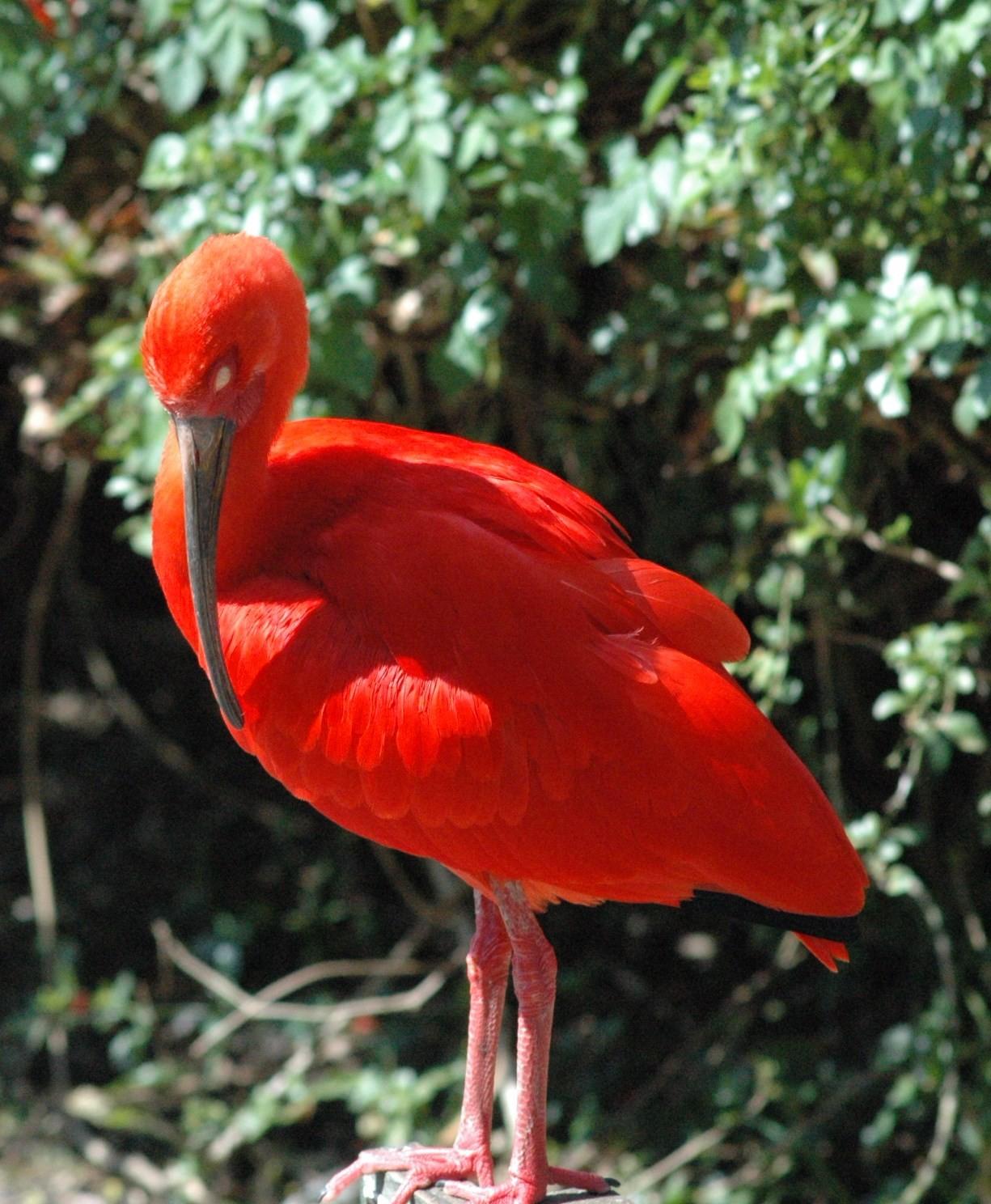 Bird of Eden