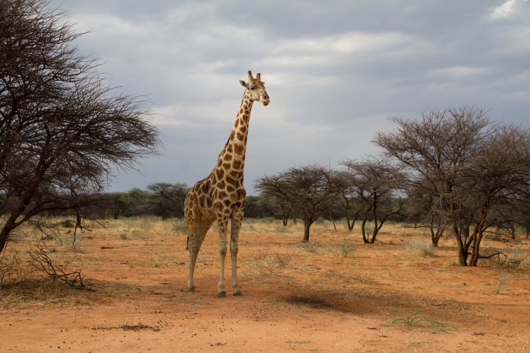Hoofdfoto bij reisverhaal 'Okonjima home of the AfriCat foundation'