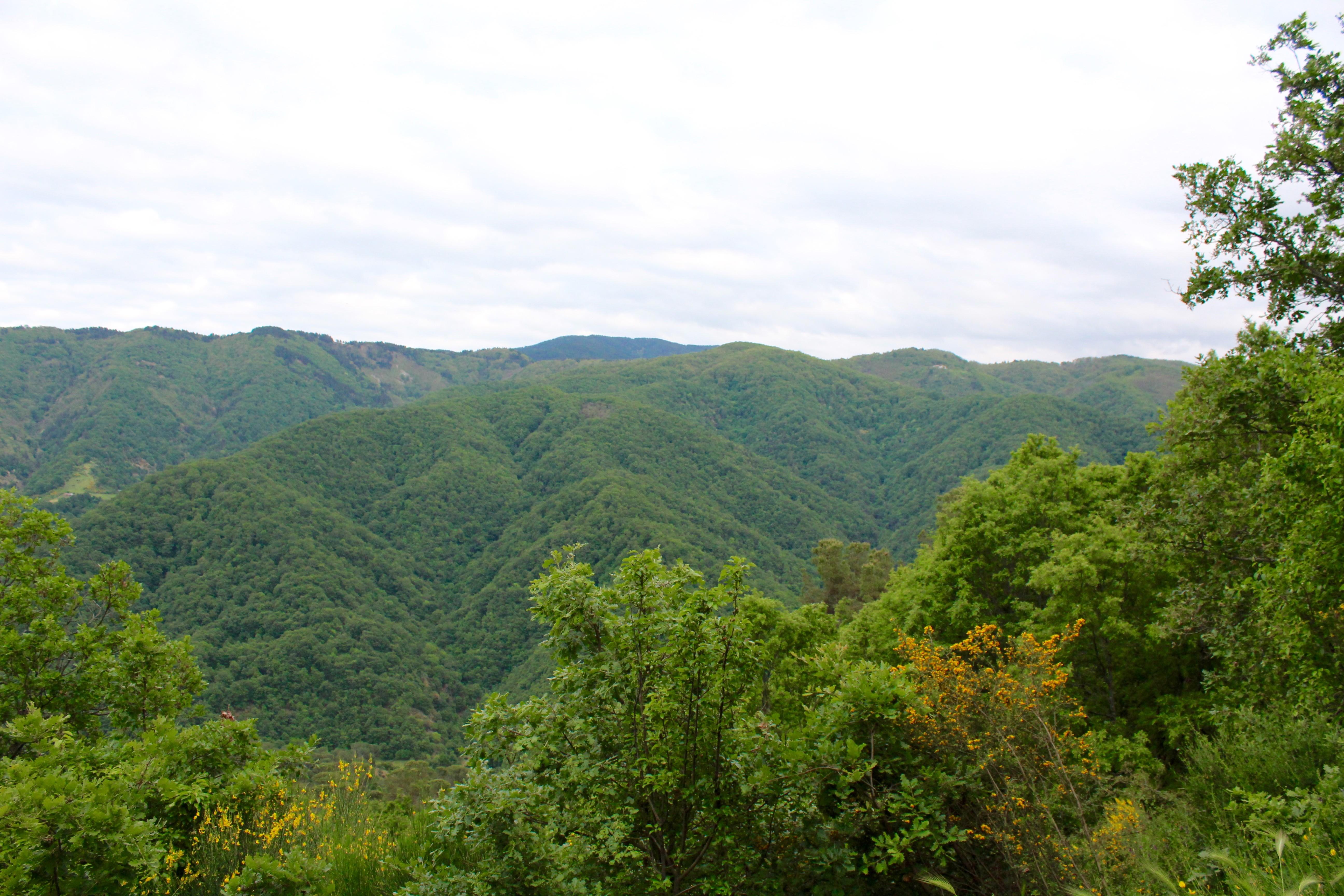 Groene bergen in Sila