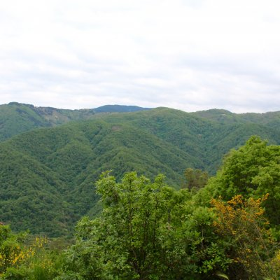 Voorvertoning Groene bergen in Sila