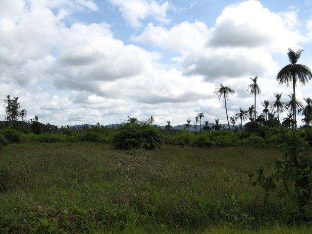landschap zuid Sierra Leone