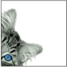 profile image feline