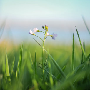 profile image comment