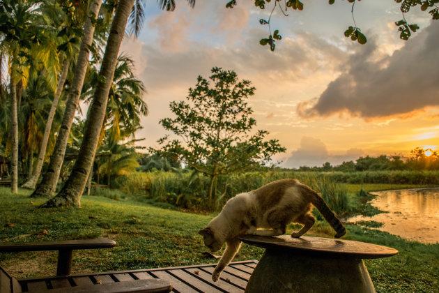 Een paradijsje op Langkawi, ook voor katten!