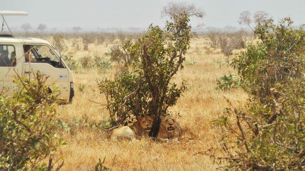 Tsavo East National Park in februari