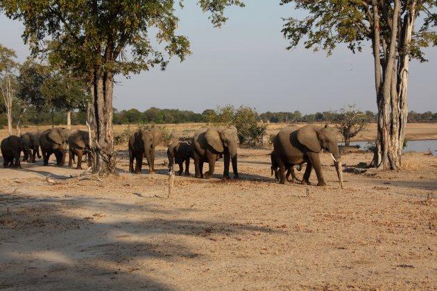 Voet Safari