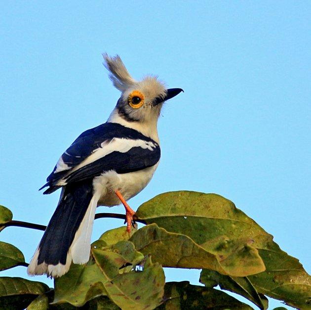 Bezek Gambia eens om vogels te spotten