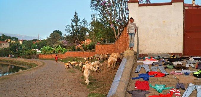 Dagelijks leven in Madagaskar: wassen en schapen hoeden in Antsirabe