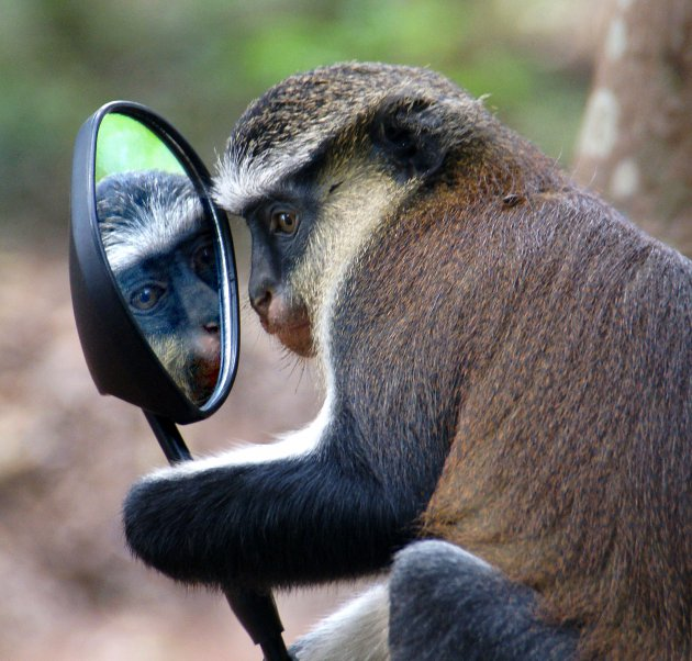 Kijk eens in de spiegel in Porto Novo