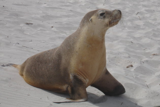 Seal on Seal Bay