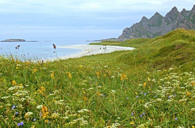 Bloemen, wit zand en bergen.
