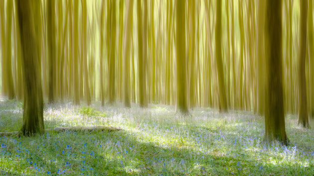 Het bos van Halle