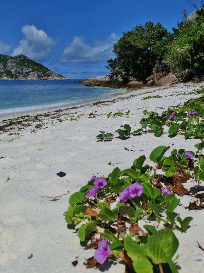 Beachflowers