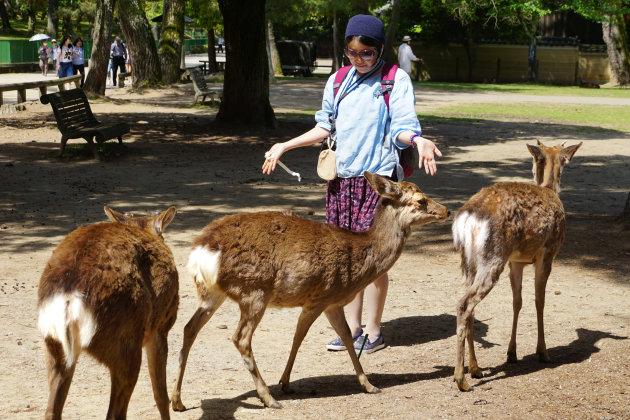 Hongerige herten in Nara