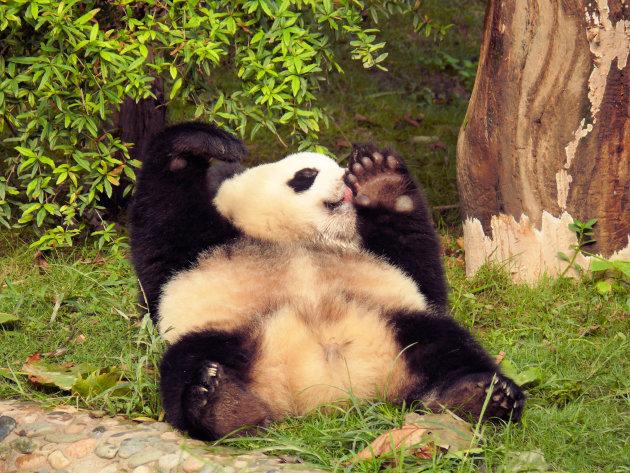 Pandareservaat