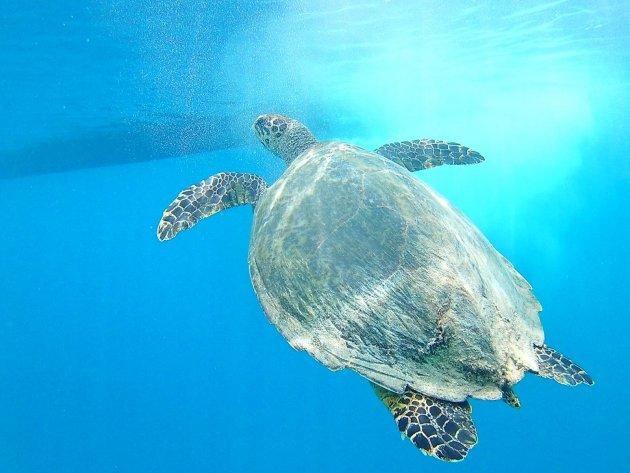 Snorkelen in de Bali zee