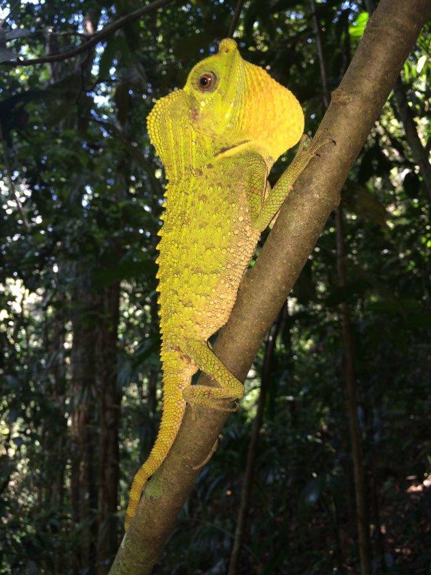 Rainforest Sri Lanka