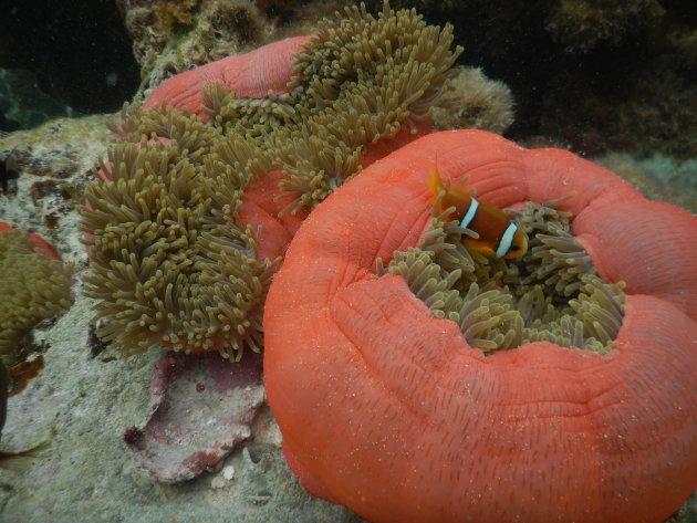 Koraaltuinen; snorkelparadijsjes