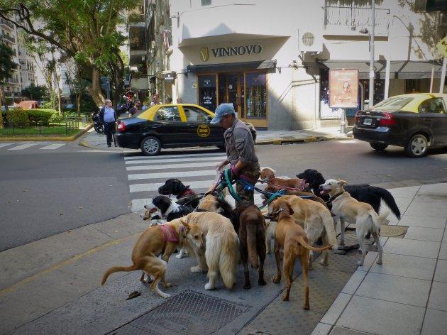 Hondenuitlaatservice in BA
