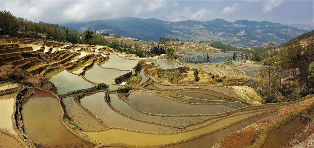 Rijstterrassen YuangYang
