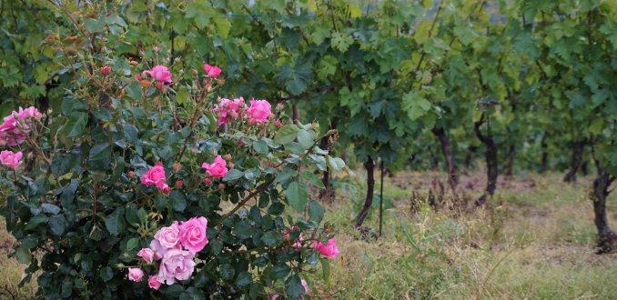 wijnstreek Monferrato