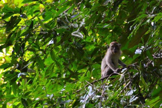 Wildlife in de jungle van Maleisië