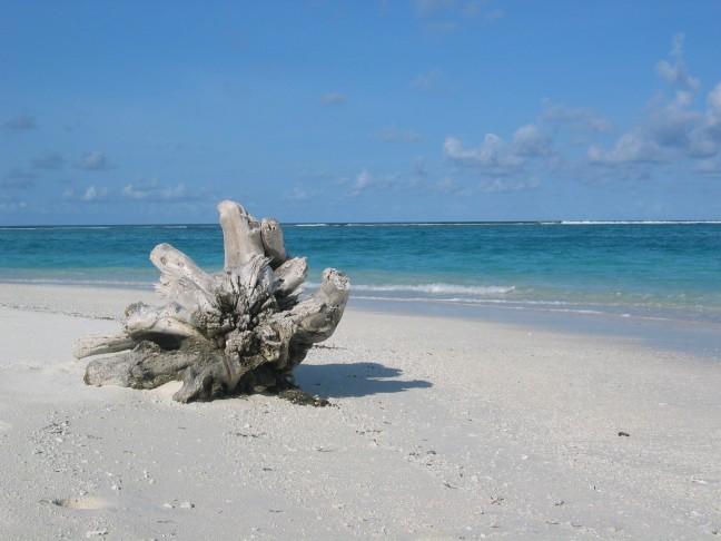 boomstronk op het strand
