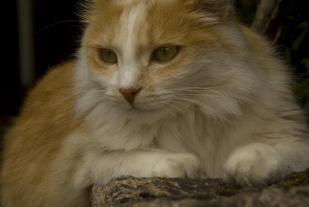 Le chat du maison