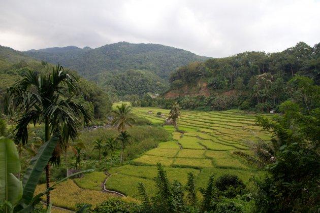 Waar oerwoud en rijstvelden elkaar ontmoeten
