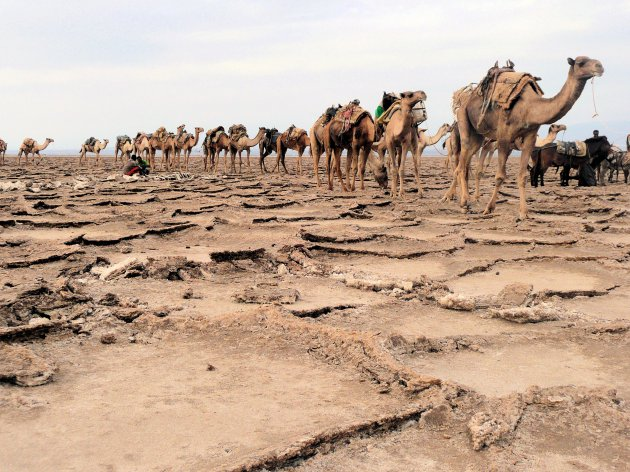 Danakil woestijn
