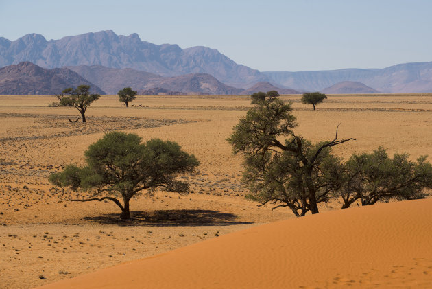 Elim Dune