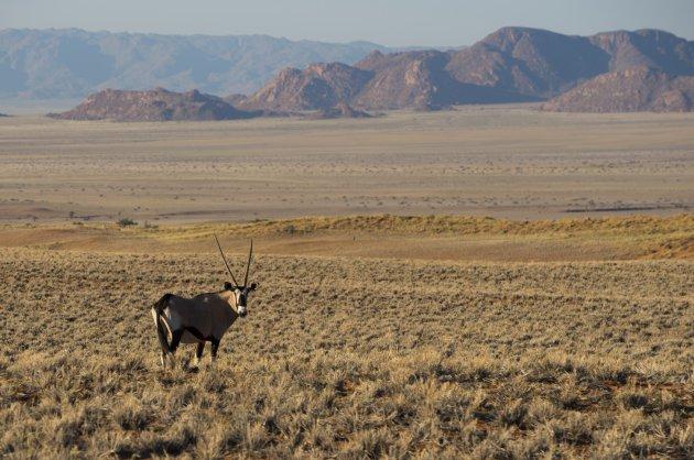 oryx in mooi landschap