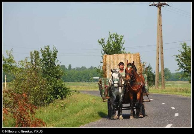 Hongaars platteland 2