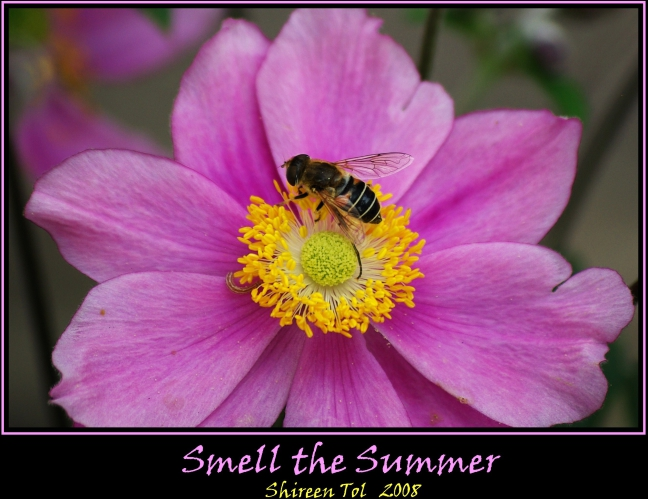 Smell the Summer