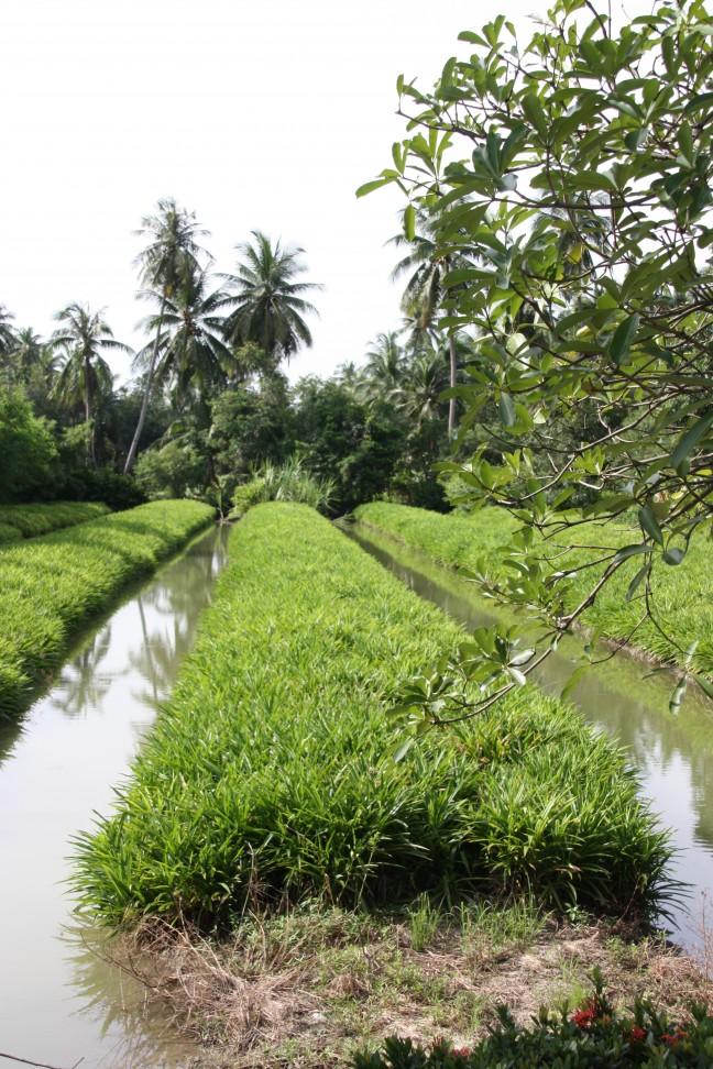 2008: Bangkok: rijstvelden