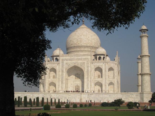 Taj Mahal onder de boom door