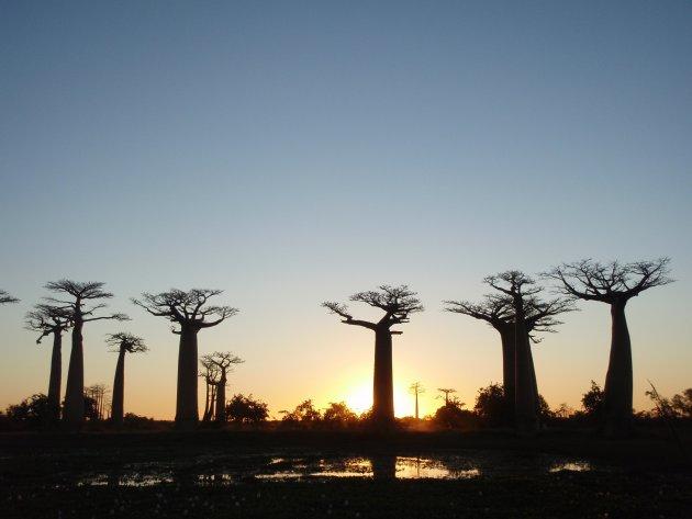 baobabs met water