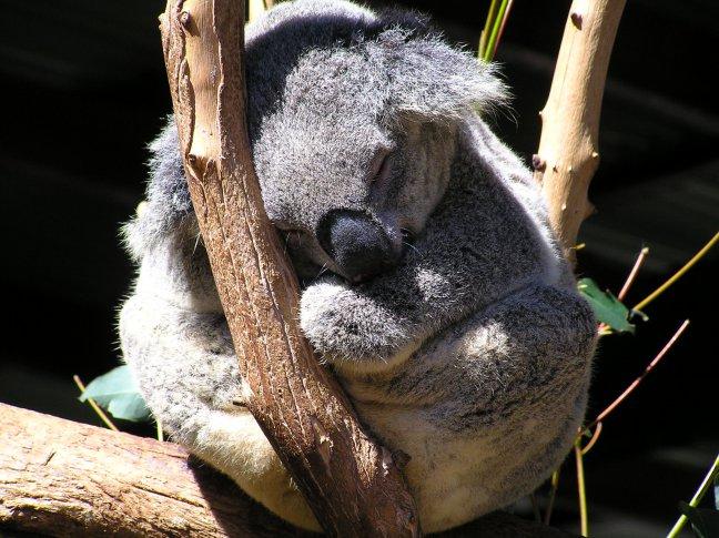 Koala zo in Rust!