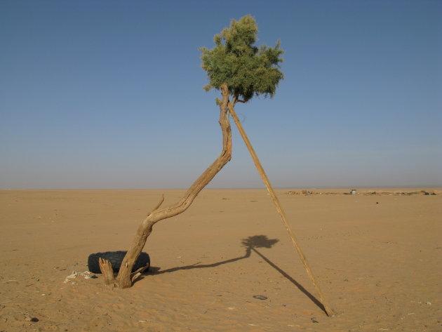 Leven in de Sahara