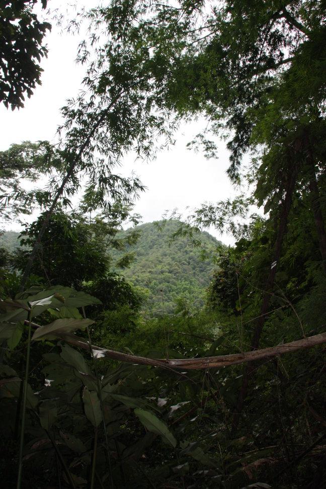 2008: Huay Nam Dang NP: jungle.